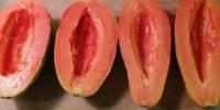 Papaya Monomeal